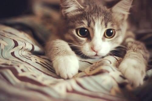 防貓跳樓刻不容緩
