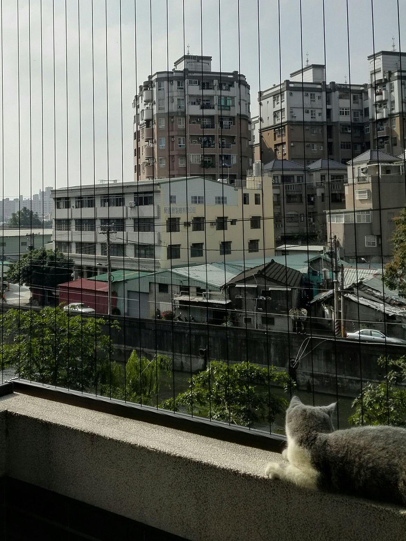 隱形鐵窗-防貓跳樓網