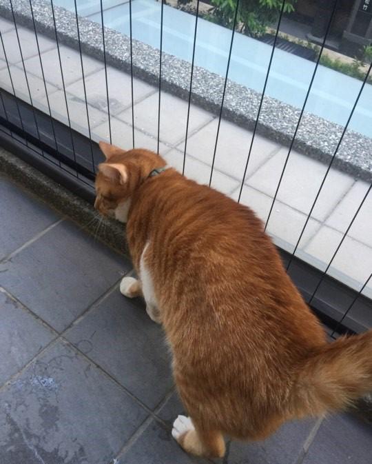 貓防墜網(隱形鐵窗)