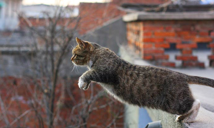 貓跳樓有解!5分鐘快速了解防貓跳樓網